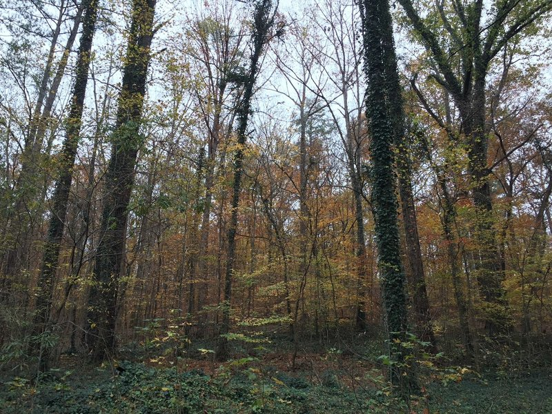 Enjoy a walk in the woods