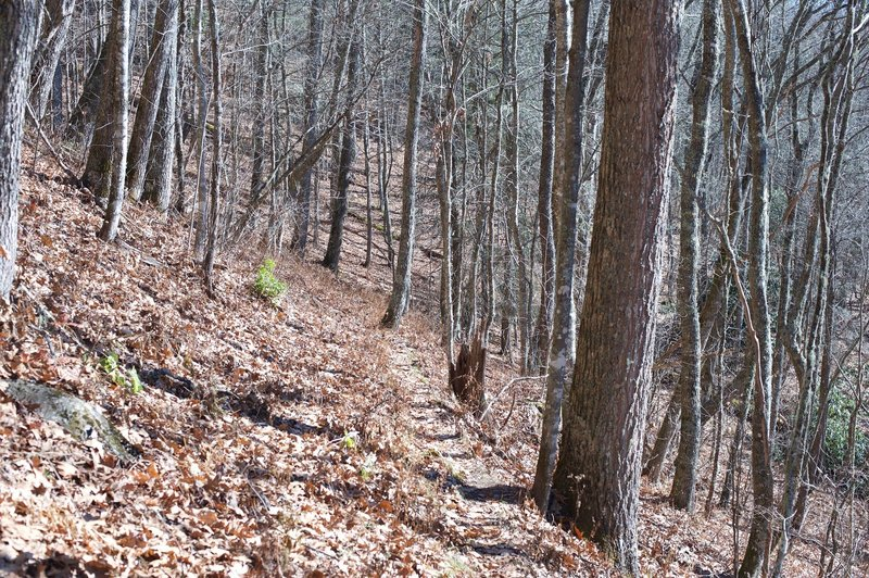 The Thomas Divide Trails can be narrow in places, so watch your step, especially in the fall when there are a lot of leaves on the floor.