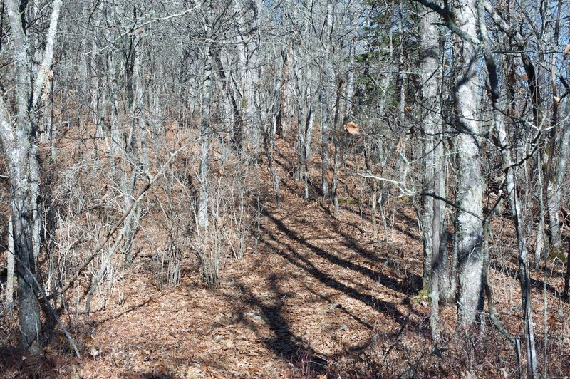 The trail can appear to be lost in the leaves in the fall.  The leaves are dry up on the ridgelines.
