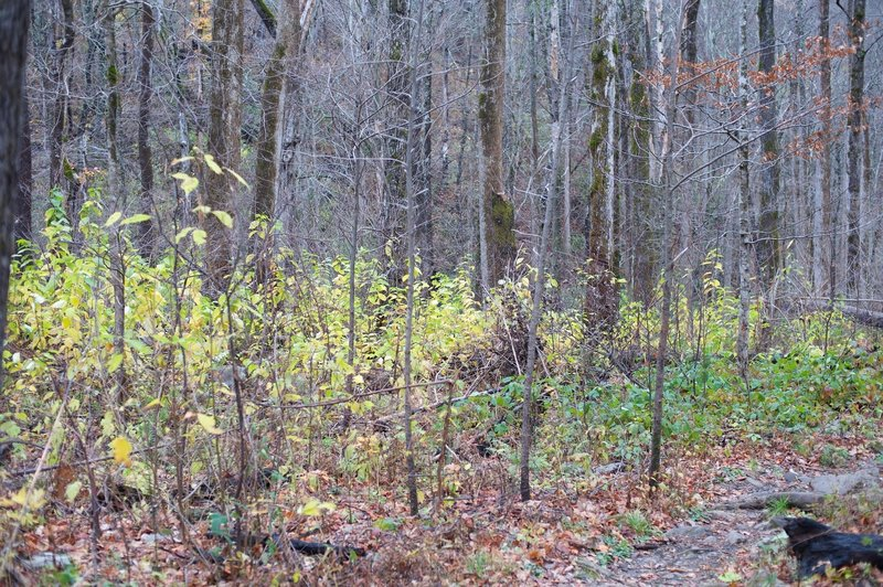 The forest recovers after the Chimney Fire came through the area in 2016.