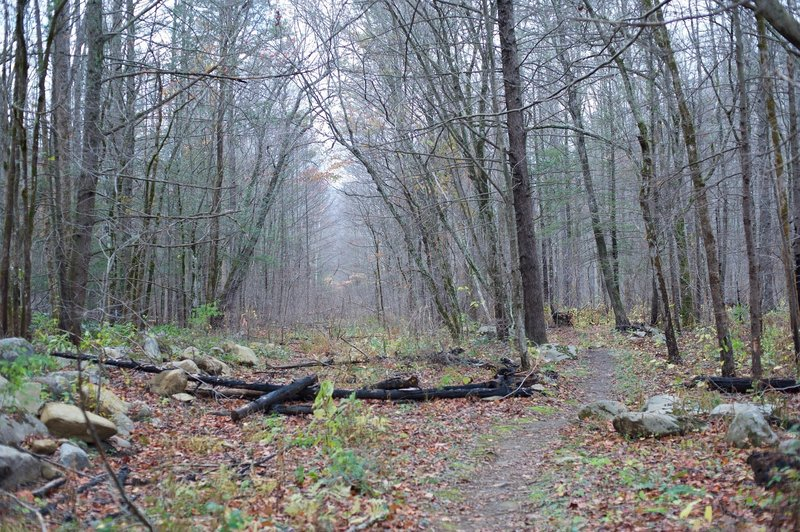 At this point, the trail runs along the old road that use to run up to the farm.