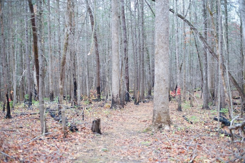 Evidence of the Chimney Fire can be seen along this trail.   The green on the forest floor is new growth as the forest begins to recover from the fire.