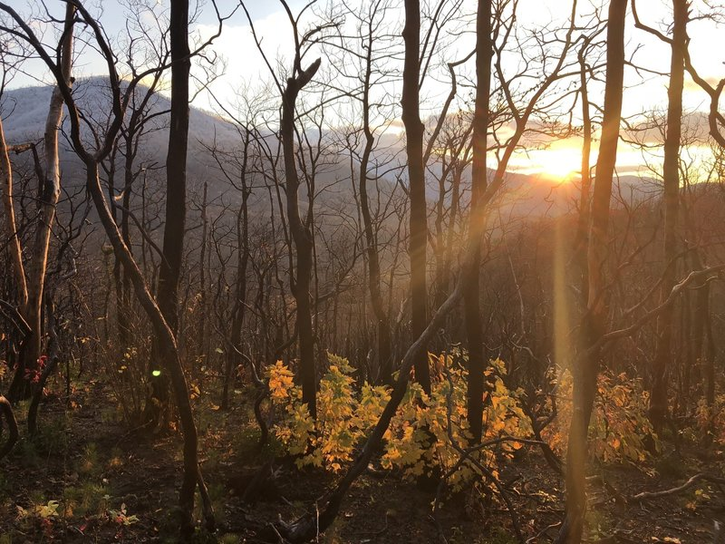 The sun sets over the mountains and through the trees along Baskins Creek Trail.