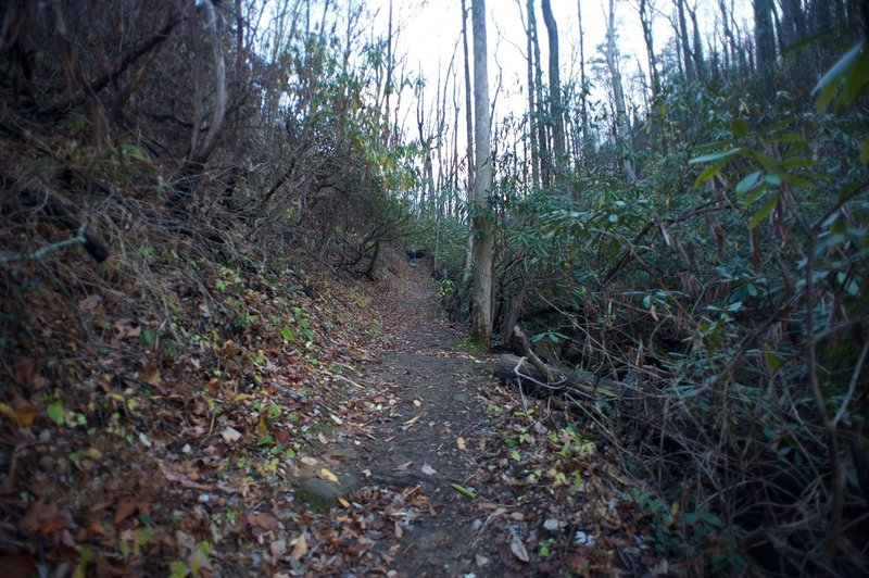 One of the steeper sections of the trail that climbs away from the falls back up toward the ridge.