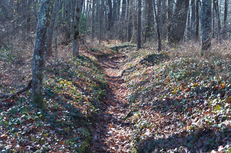 The trail narrows in places.   Fall brings a lot of fallen leaves, so watch your step as rocks and roots may be hiding underneath.