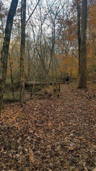 Manmade rails along Little Creek
