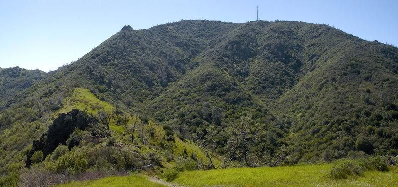 Looking up toward Mount Diablo from Bald Ridge Trail