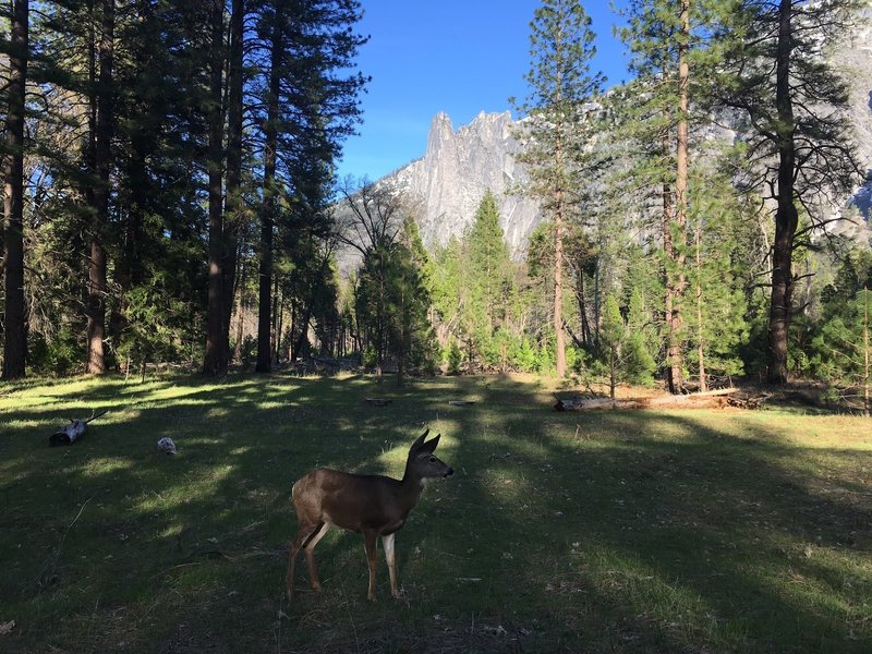 One of Yosemite's full time residents.