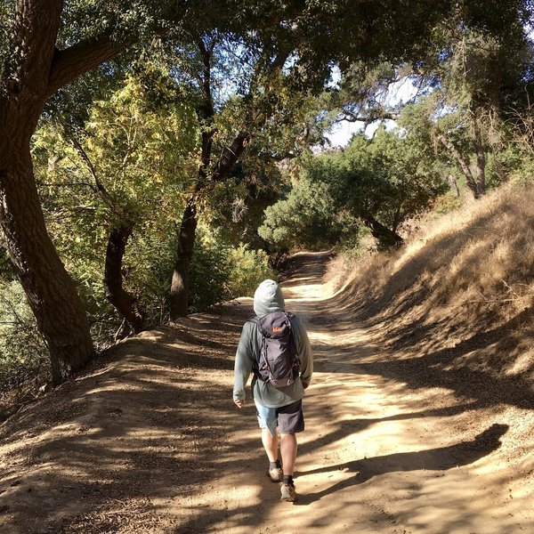 Willow and Sycamore Trees along Telegraph Canyon Trail