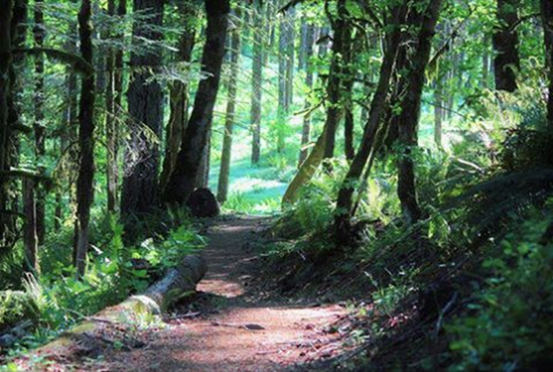 Example of forested portion of trail system.