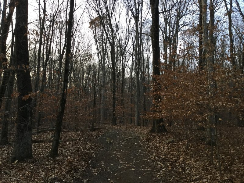 Late autumn through the forest