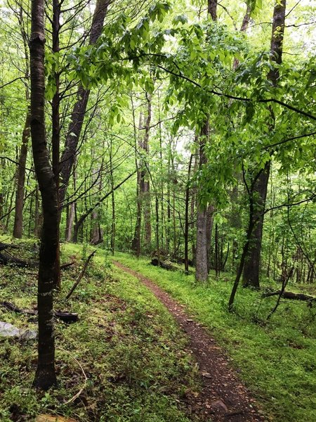 The Wood Ducky Way trail travels through some beautiful thick forests.