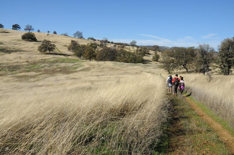Craig Canyon -Thompson Canyon Trail through oak grassland.
