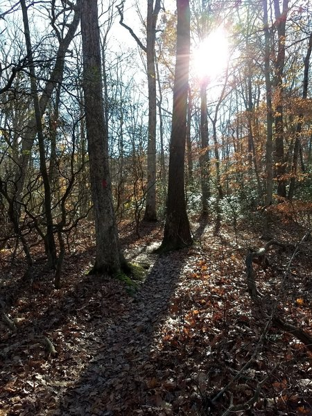Sun shining through the trees where the trail gives you a quick breather.