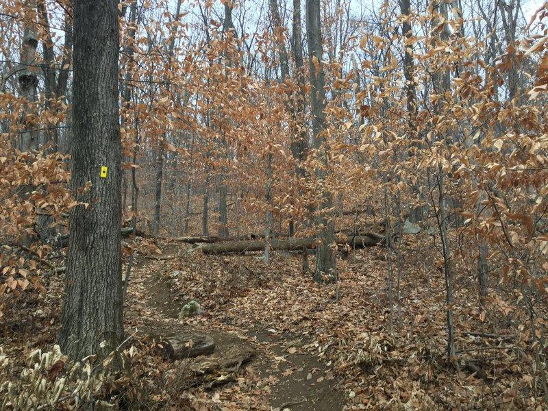 Bee-Line Trail