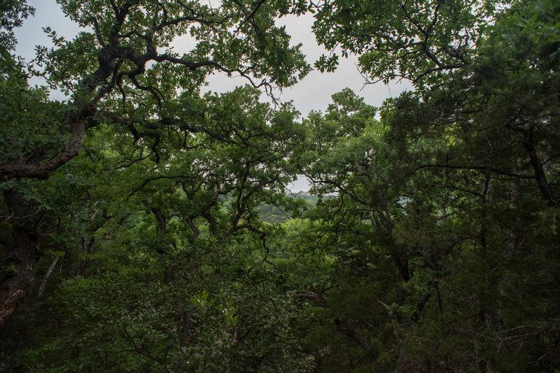 Fern Del Trail