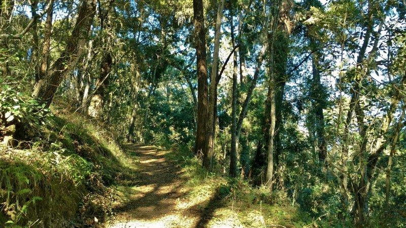 Mixed oak woods along the sunny, higher section of Oak Ridge Trail