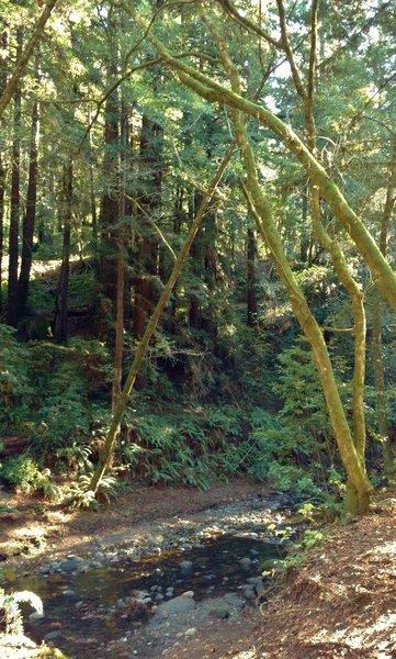 Aptos Creek at the Terrace Trail crossing