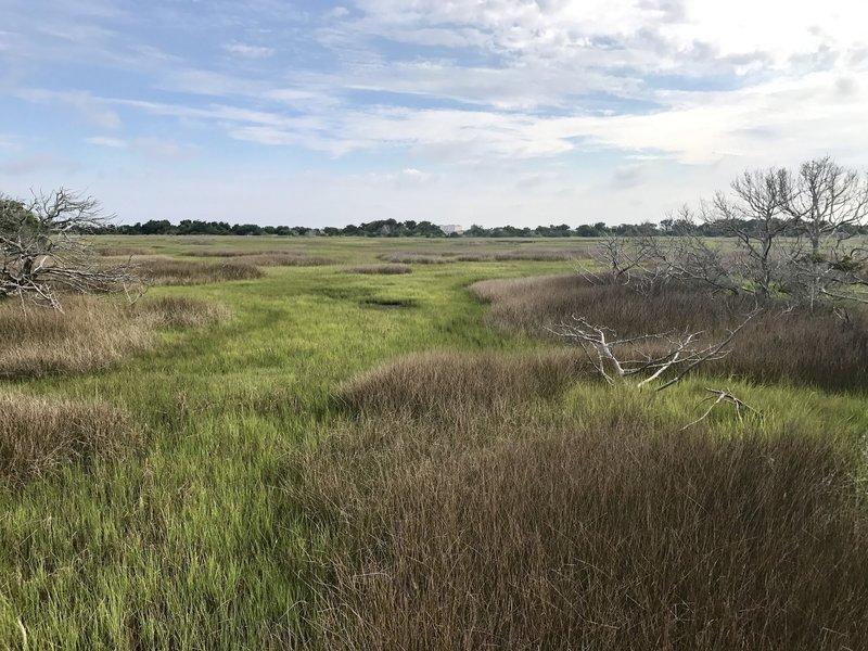 Ft Macon wetlands