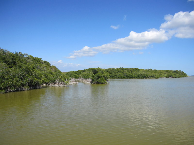 Mangrove forest