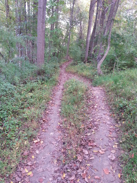 A short straight stretch along the Amphitheater Trail.
