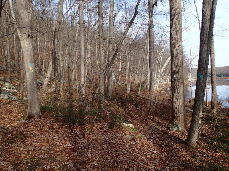 Trail junction at Beaver Pond