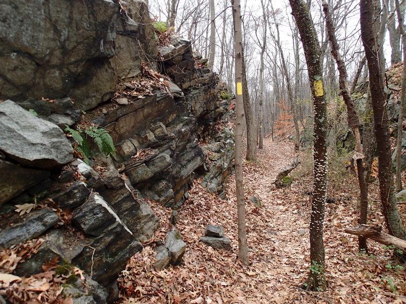 Wildcat Ridge Trail follows old rail bed