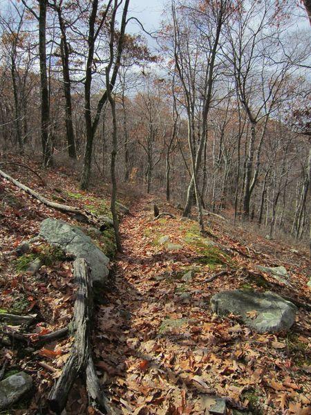 Hibernia Brook Trail.