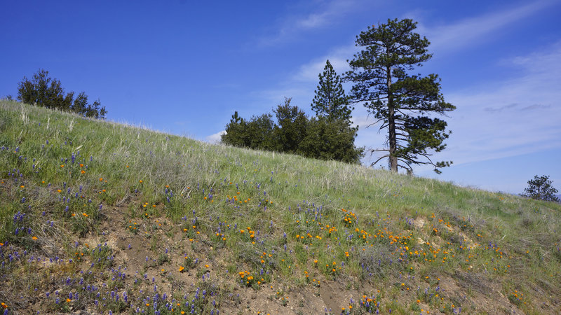 Trees and Wildflowers