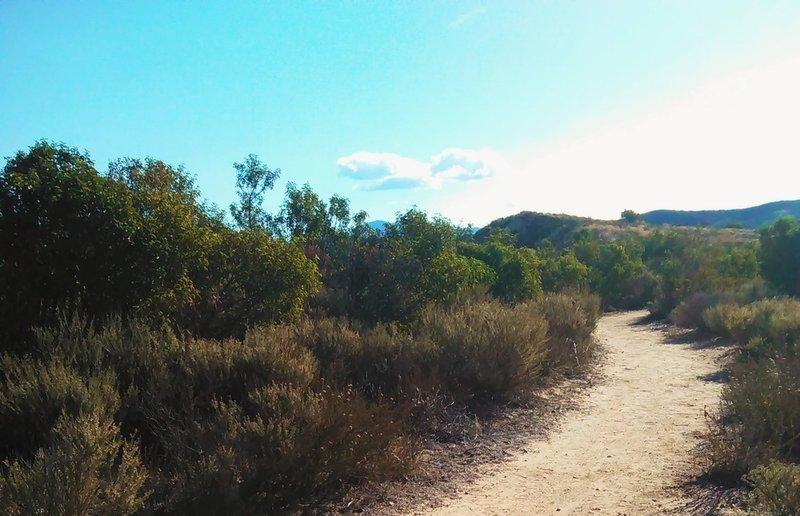 Puma Ridge - the easy part