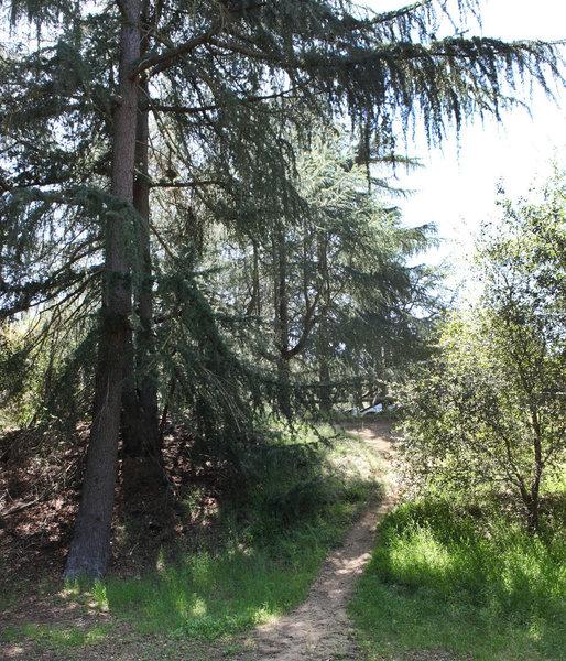 Windom Earle's Cabin Spot