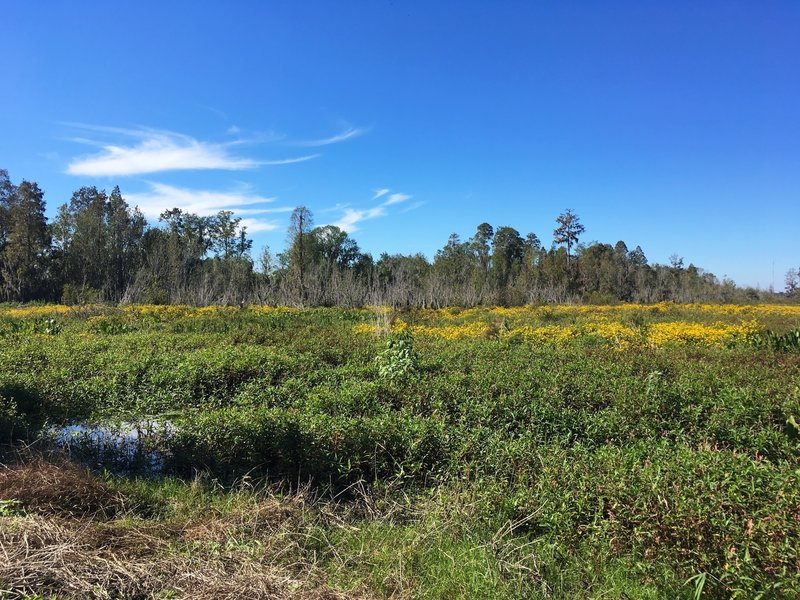 Swamp, marshes, wildflowers along the trail