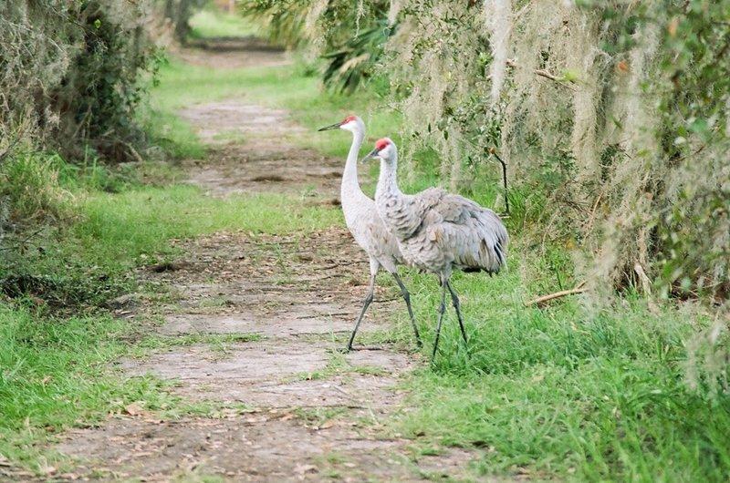 Large birds on Marsh Rabbit Run