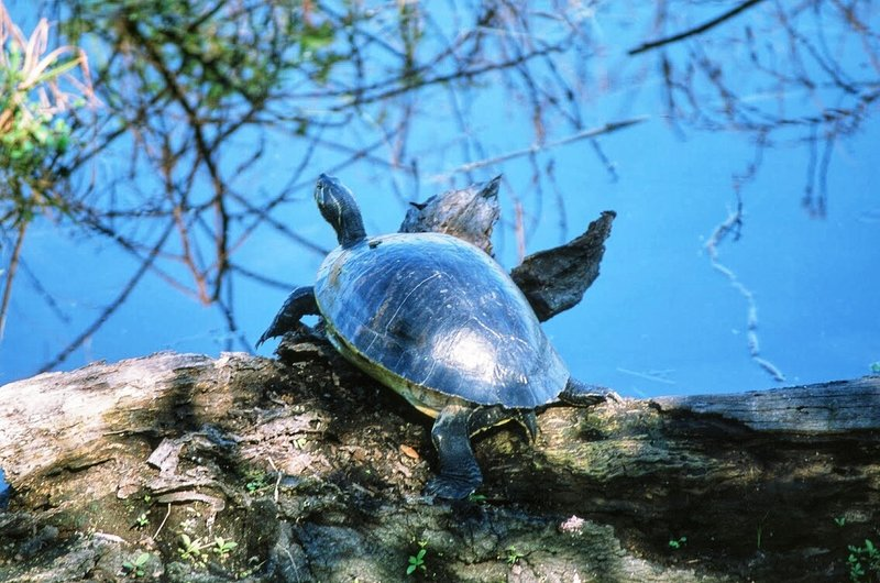 Turtle, you'll be up close to a lot of wildlife here