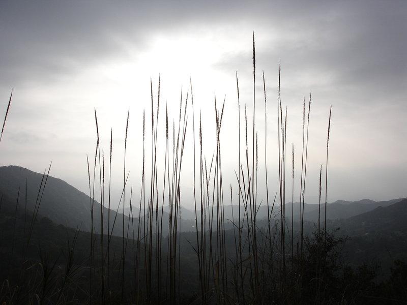 Reeds on the Calabasas Peak Motorway Trail