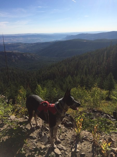 Cadence overlooking the view of the Wenatchee Valley from the Pipeline Trail