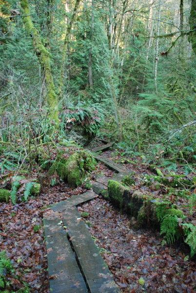 Wooden planking to cross a wetland area along Wilderness Creek Trail
