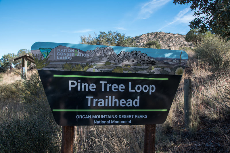 Pine Tree Trail - Trailhead