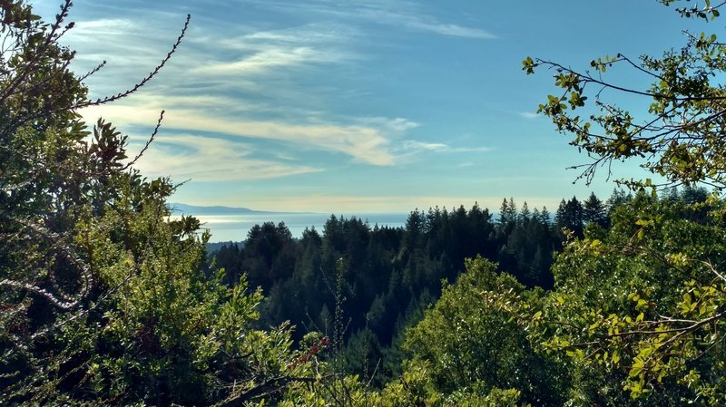 The Pacific Ocean in the distance, can be seen through breaks in the trees, looking past a redwood forested ridge.