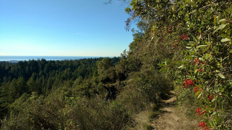 Looking out over the redwood forested ridges, to the Pacific Ocean, from high on West Ridge Trail.