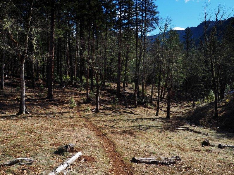 Descending the Osprey Trail