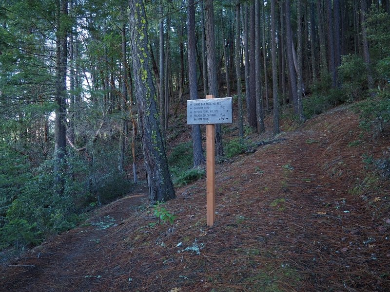 The Payette / Sinns Barr trail junction
