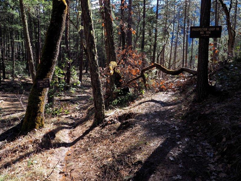 The Osprey / Prospectors Loop trail junction