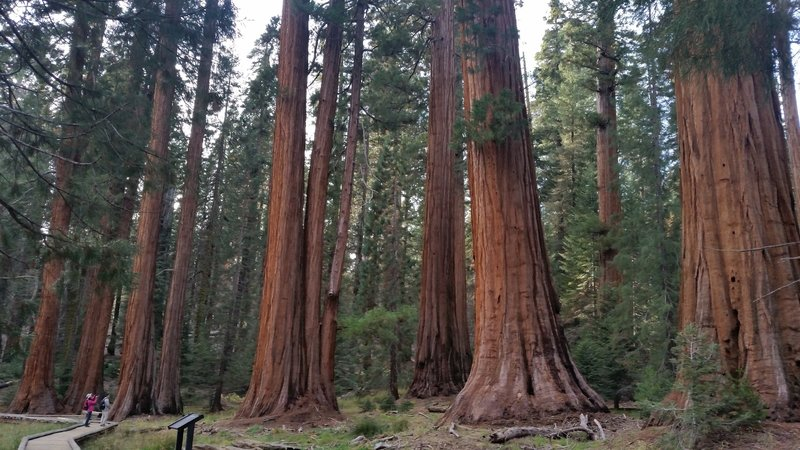 The promised big trees.