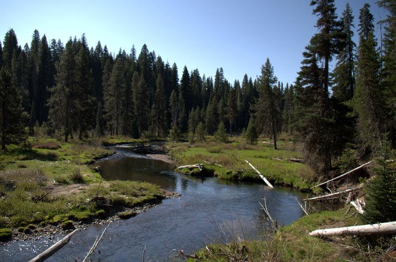 Meadows and meanders along Muir Creek