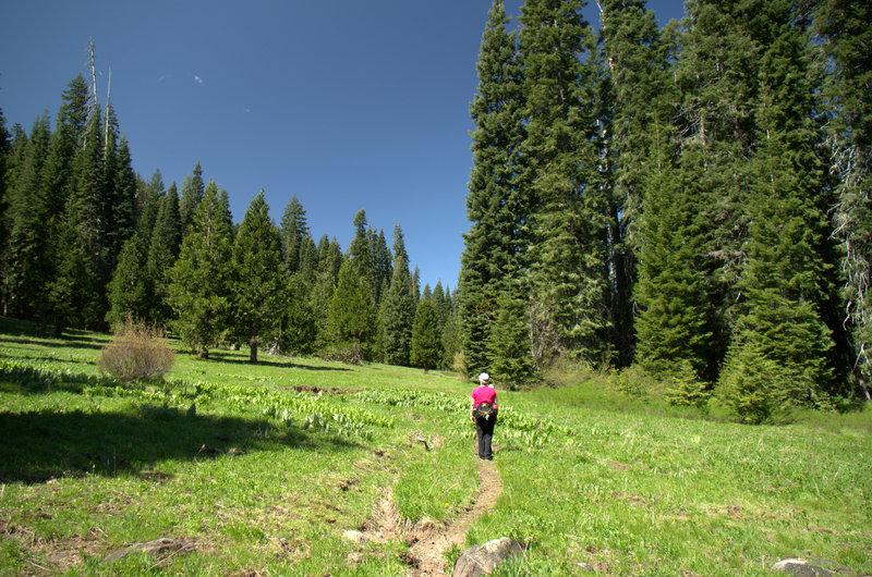 Entering Hummingbird Meadow