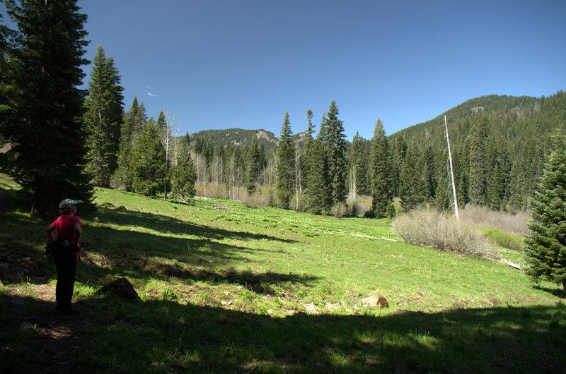 Further up Hummingbird Meadow