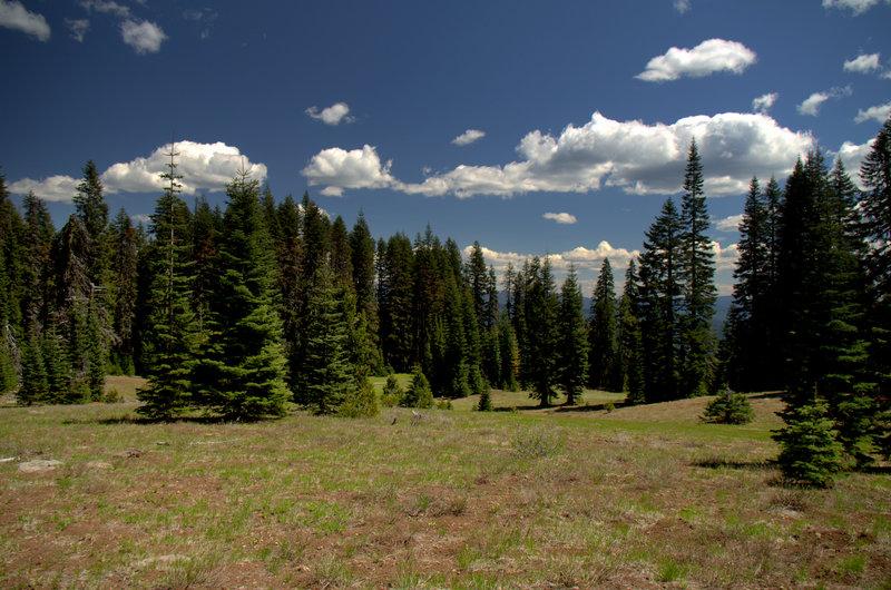 Alkali Meadows