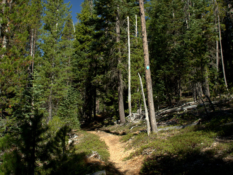 The trail up from the lower trailhead.