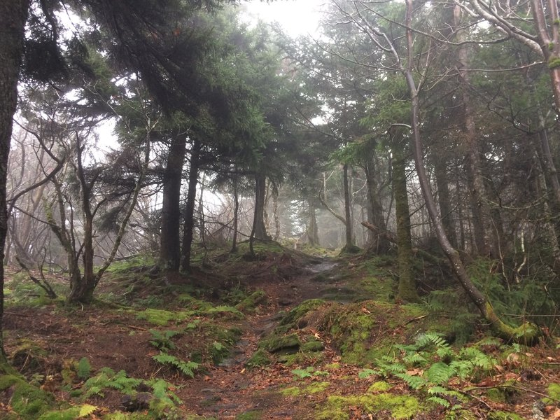 Misty ridgeway trail.